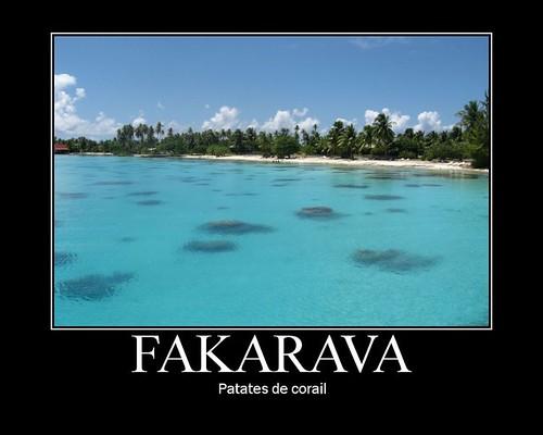 Fakarava corail