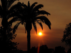 mid afternoon in smokey skies (BellaGaia) Tags: trees light sunset sun palms palmtrees