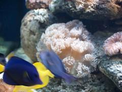 P9283410 (shayoctave) Tags: sea fish tan shay