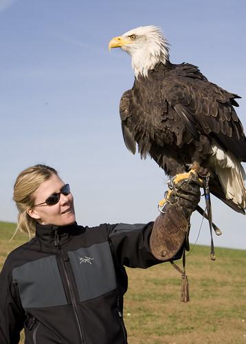 Eagle02.jpg