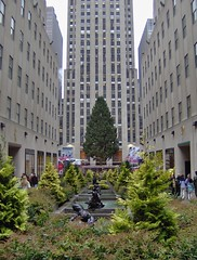 Rockefeller Center's 2007 Christmas Tree 11/9/07: View From 5th Avenue by peterjr1961, on Flickr