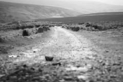 Path (harry.1967) Tags: uk britain yorkshire gb moors ef50mmf18 andrewlee niftyfifty sooc canon400d focusman5 harry1967