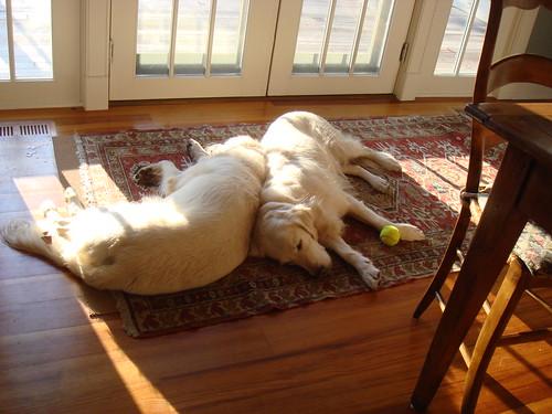 Dozing Dogs