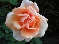 P4230045.JPG (Gail Chris Spinks) Tags: florafauna