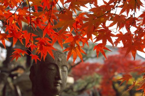 Seijokein Temple (清浄華院)