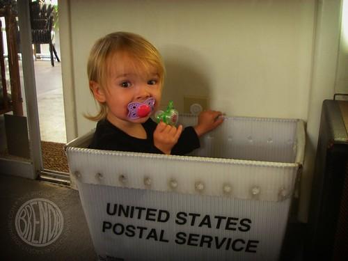 the shipping box elf