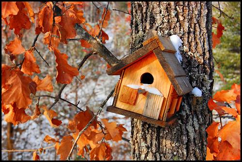 Bird House, HDR
