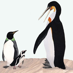 The late Eocene giant penguin Icadyptes salasi (right) and the middle Eocene Perudyptes devriesi (left) are shown to scale with the only living penguin inhabiting Peru, Spheniscus humbolti (center)
