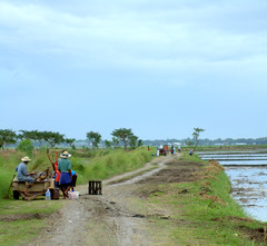 Road to the Wetlands (Rey Sta. Ana) Tags: wild bird birds wildlife philippines manila rey avian palawan wildbirds mantarey candaba staana