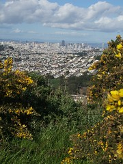 San Francisco skyline and flowers
