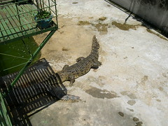 Irwan Crocodile Farm (Bradfordian Cliff) Tags: philippines palawan crocodilefarm palawanwildliferescueandconservationcenter