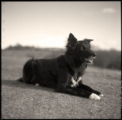 FP4+ (5) - Murph (retrophotouk) Tags: uk 6x6 mamiya reed mediumformat photo retro ilford fp4 neal c330 microphen 8mins retrophotouk
