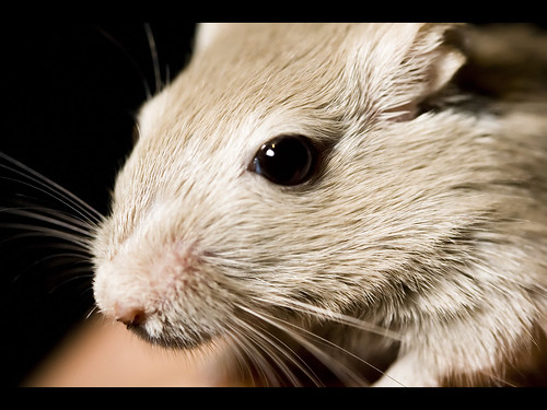 What Can You Use As Gerbil Bedding Ehow Uk