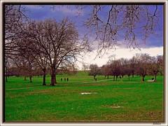 St. James's Park (bibizu) Tags: park parco plant green london foglie alberi voyager inverno autunno viaggi londra theunforgettablepictures bibizu