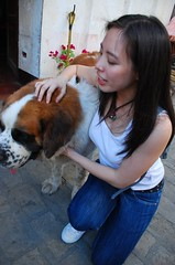 Vigan: Bernie the town dog