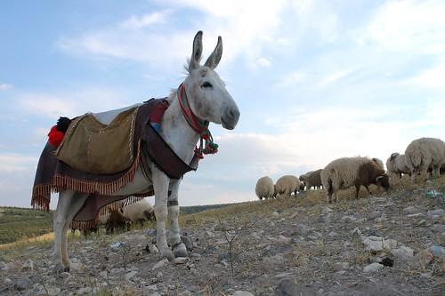 The famous donkey