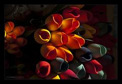 Fiori I (Emilio Casini) Tags: colors colori colore fiori flowers fioridilegno artecolorata luce light ombre shadows shadow ombra chiariscuri lightshadow shadowlight gününeniyisithebestofday gününeniyisi thebestofday greaterphotographers nikonpassion nikon passion