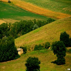 Little Rural House (Osvaldo_Zoom) Tags: trees house green yellow rural landscape nikon fields agriculture marche macerata d80 montesangiusto