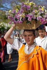 Madeira Flower Festival (Madeira Island) Tags: flowers flores portugal festival flor blumen madeira bloemen funchal ilhadamadeira flowerfestival 2011 madeiraisland festadaflor blumenfest bloemenfeest