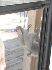 squirrel at door