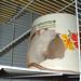 Rat room