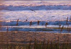 Gulls and Sea Grass (klg1309) Tags: sea water sunrise sand seagull wave myrtle beachnc anawesomeshot superbmasterpiece