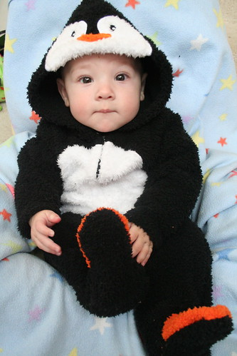 cutest penguin for halloween - Infant Penguin Halloween Costume