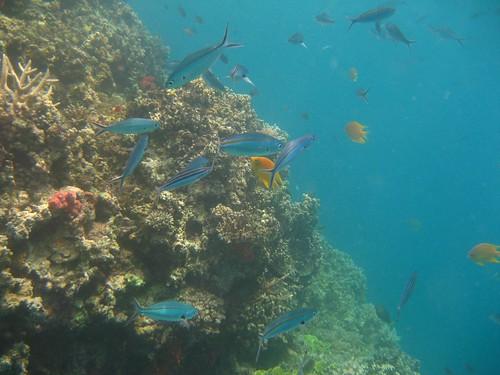 Makogai fish 6