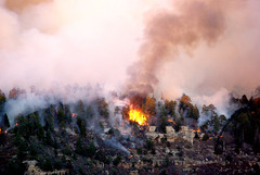 Grand Canyon North Rim fire (Al_HikesAZ) Tags: park camping wild arizona forest fire nationalpark hiking quote plateau grandcanyon smoke grand canyon explore burn national backpacking backcountry forestfire wisdom fires northrim controlled wildfire prescribed grandcanyonnationalpark kaibab coloradoplateau supershot gcnp azwexplore anawesomeshot gc2007 alhikesaz nankoweap2007 discussionthread virtualjourney 033109 25favesdiscussionthread