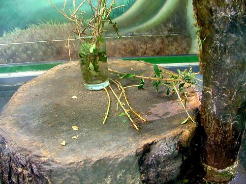 Ali Bojar님이 촬영한 Leafcutter ants.