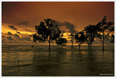 Golden  Hour (Dashuki Mohd) Tags: sunset sea beach nature silhouette clouds landscape lights mangrove malaysia 1022mm canonefs1022mmf3545usm naturesfinest banting supershot mywinners abigfave canon400d anawesomeshot firsttheearth diamondclassphotographer excellentphotographerawards awe2020 pantaikelanang