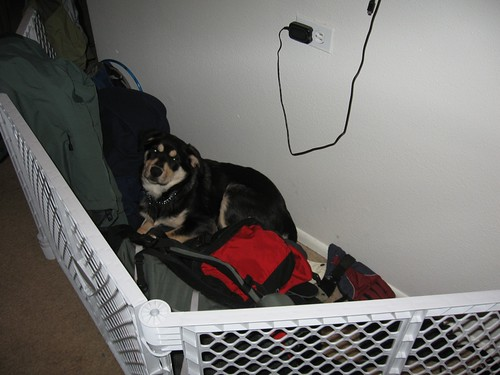 Shiloh napping in the jacket corral.
