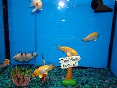 This Water is Cold! (Svadilfari) Tags: blue pet fish cold water sign shop aquarium store tank stones walmart fishtank fishbowl departmentstore petshop chainstore petstore superwalmart walmartsupercenter petdepartment