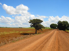 Road to tranquillity (marlenells) Tags: road tree topf25 paraná clouds landscape topf50 soe maringá digitalcameraclub impressedbeauty superbmasterpiece photoexplore world50f showmeyourqualitypixels 100commentgroup