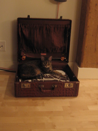 My kitty in a vintage suitcase bed