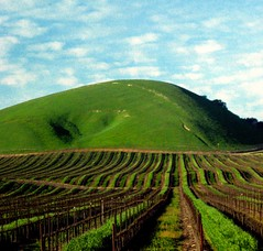 "Vineyard and Hill ""Sideways"" Country (moonjazz) Tags: california trip travel verde green field santabarbara landscape photography vineyard wine explorer country hill shapes roadtrip explore rows crop harmony grapes produce lovely agriculture centralcoast bump vino centralcalifornia flckr moonjazz roliing"