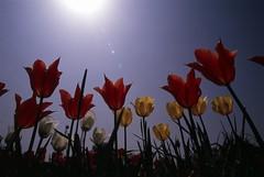 Velvia (kamonegi_jp) Tags: sky plants flower film eos velvia100 eos1v diamondclassphotographer flickrdiamond ef20mmf28usm