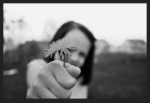 bwborder dandelion girl
