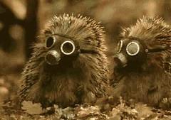 HedgehogGoggles_rbu_ru_ejiki (Madame Maracas) Tags: cute photo chibi goggles adorable tiny gasmask hedgehog