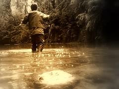 My River ,My Passion...fly Fishing (Nicolas Valentin) Tags: scotland fishing nv kelvin flyfishing trout kelvingrove riverkelvin supershot mywinners abigfave nicolasvalentin aplusphoto rnbkelvin lesolitaire