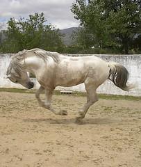 IM005847 (Mosaik!!!) Tags: horse cavalo pferd
