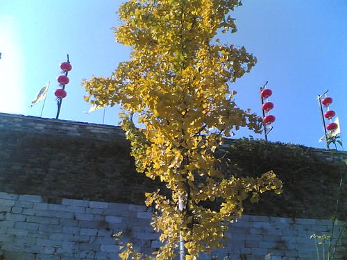 20061111_011_