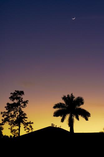 Twilight Palmtree take 2