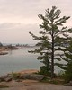 Benjamin South (Rock Steady Images) Tags: ontario tree pine canon island eos 350d rebel xt granite manitoulin 50views huron canadalake northchannel 25views benjaminislands 7pointsystem bypaulchambers rocksteadyimages