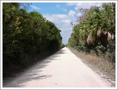 The Loop (Big Cypress National Preserve) (John Lamont1) Tags: leica digilux2 florida everglades landscape
