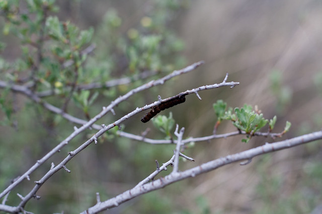 alder springs10 (1 of 1)