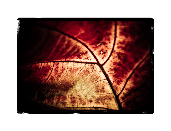 autumn's leaves 07