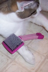 My Pink Brush