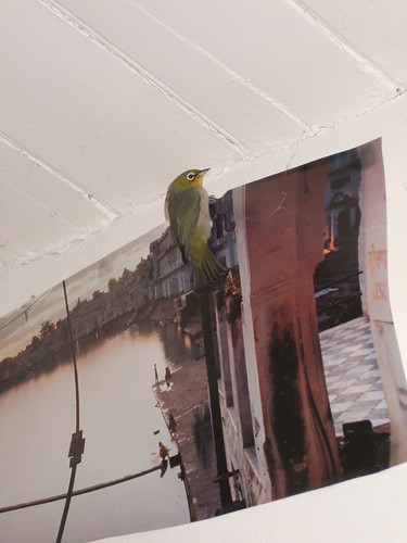 Sparrow on Poster