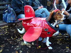 red barron (istolethetv) Tags: dog beagle photo foto image awesome snapshot picture photograph gothamist   tompkinssquarepark dogcostume halloweendogparade redbarron dogwearingclothes halloweendogcostume 17thannualtompkinssquarehalloweendogparade halloweencostumesfordogs